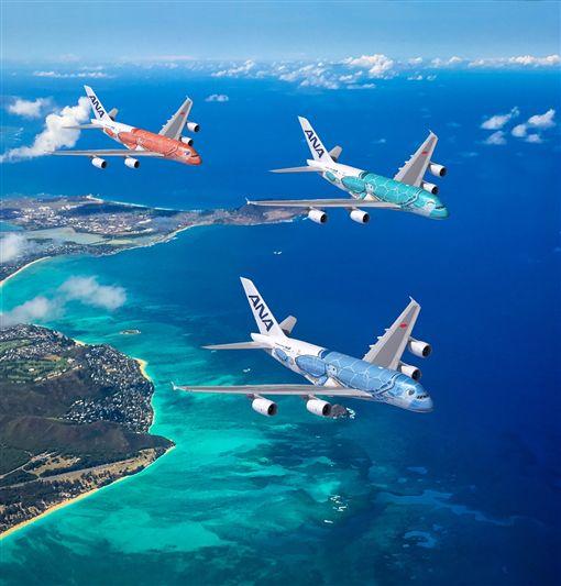 主圖1:ANA海龜機帶你前進夏威夷(圖/ANA提供)