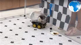 老鼠,開車,實驗(圖/翻攝自DailyNation Youtube)