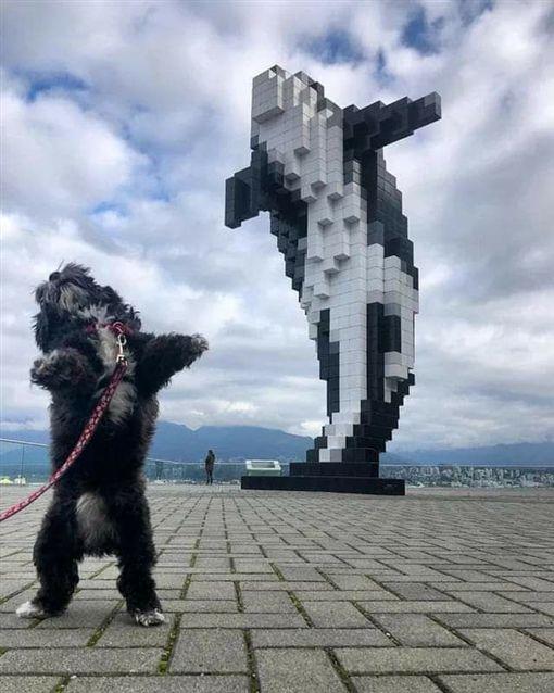 小狗,藍鯨,雕像,神還原,爆廢公社 圖/翻攝自臉書爆廢公社