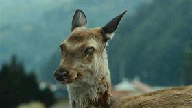 鹿(圖/翻攝自微博)