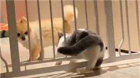 貓咪越獄。(圖/翻攝自抖音app「dalinlingg」)