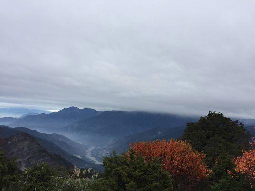 阿里山楓紅了(2)阿里山國家森林遊樂區的青楓、紅榨槭等變色葉植物,已開始慢慢轉黃變紅,換上繽紛美麗的新裝。(林管處提供)中央社記者蔡智明傳真  108年10月29日