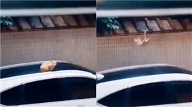 貓咪落地。(圖/翻攝自抖音APP「30240894433」)