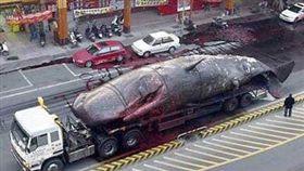 台南鯨魚大爆炸,爆廢公社,網友回憶,抹香鯨,爆炸(圖/翻攝自爆廢公社)