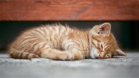貓咪被桶20刀。(示意圖/pixabay)
