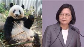 蔡英文,熊貓,中國(組合圖/資料照)