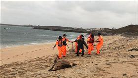 澎湖,合界海灘,海豚,死亡多時,就地掩埋(圖/第七岸巡隊提供)中央社
