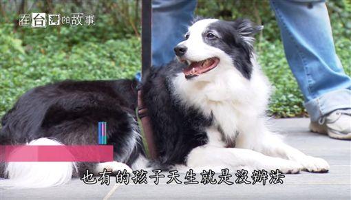 【桃園】神奇動物醫生 在台灣的故事第(節目截圖)