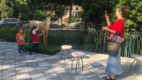 新竹市,動物園,重新開園,雕塑,舊城區,林智堅(圖/中央社)