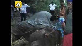 大象,過勞死,斯里蘭卡,遊客,高溫(翻攝梨視頻)