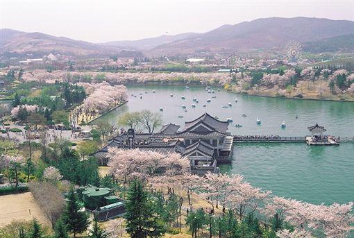 ▲慶州普門旅遊區是春季賞櫻名所(圖/韓國觀光公社)