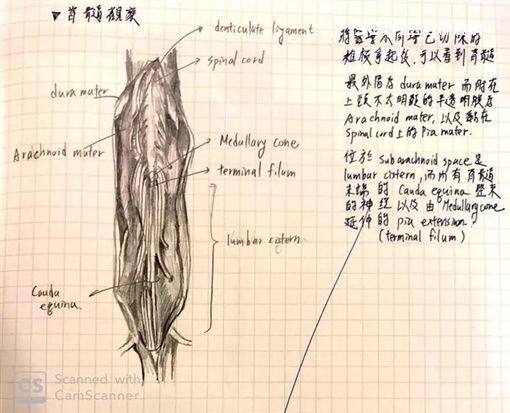 牙醫系學霸「超狂筆記」(圖/女大生授權提供)
