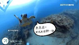 傑尼龜碰瓷1800