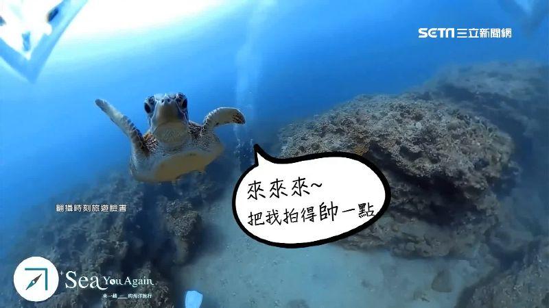 傑哥不要!海龜明星「傑尼」瘋玩碰瓷 遊客摸到就罰30萬