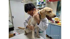 狗狗檢查後並無外傷