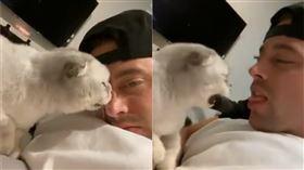 奴才舔貓。(圖/翻攝自推特用戶@ColtonCarlyle)