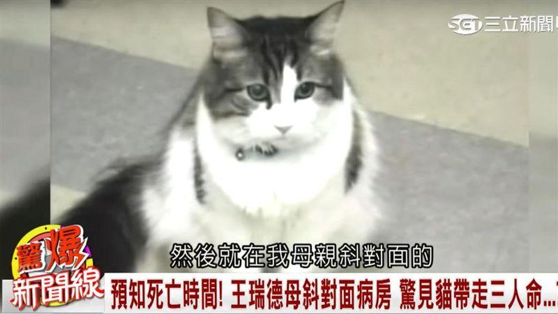 預言死亡的貓 牠們能嗅出死神的味道