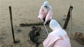 馬祖,海豚,一日,兩隻死亡,積極處理(圖/馬祖岸巡隊提供)中央社