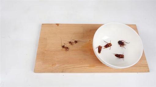 美洲大蠊,蟑螂,酥炸,料理,噁心 ID-2243753