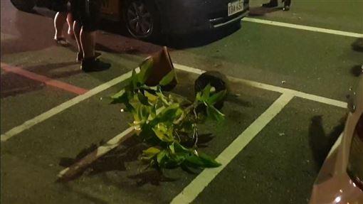 花蓮,毆打,酒客,計程車,盆栽