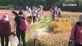 賞花爆踐踏1200