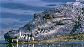 毒品沖馬桶…野生動物被迫喝毒水 河川現嗑藥「冰毒鱷魚」(圖/翻攝自pixabay)