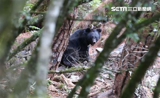 ▼▲(圖/牽猴子提供)《黑熊來了》