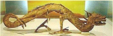 龍標本(百度百科)