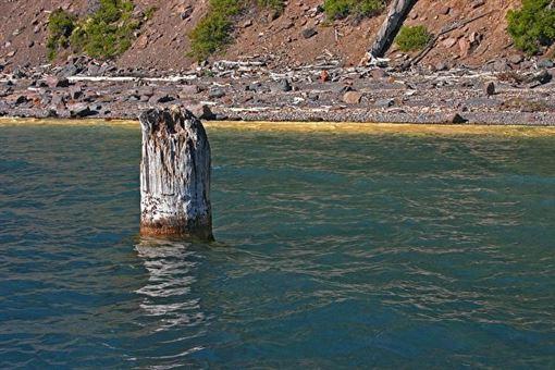 美國,火山湖,木樁,湖中老人
