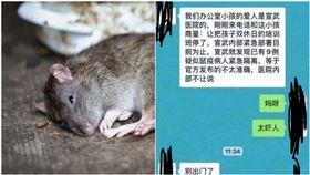不只2人染鼠疫?陸官方疑封鎖消息 北京醫護人員對話流出(圖/翻攝自小妹防爆團臉書)