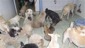 泰國,流浪狗,流浪貓,賣腎,領養(圖/翻攝自ปรีชา ขวัญมงคล臉書)