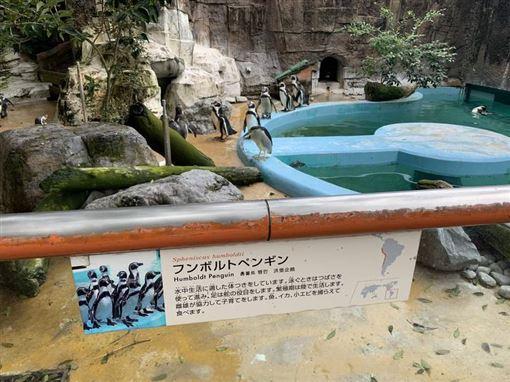 日本,動物園,夜鷺,企鵝