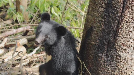《黑熊來了》大麥影像傳播工作室