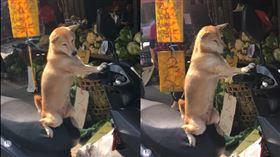 柴犬,菜市場,機車,顧車(爆廢公社)