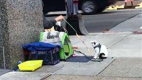 街友收養病貓乞討的錢全拿來買飼料 愛心舉動秒獲工作 (圖/翻攝自臉書Safe Haven Pet Sanctuary Inc.)