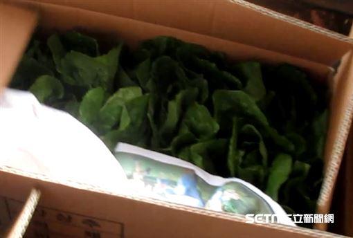 自韓國進口的「蘿蔓萵苣心(FRESH ROMAINE LETTUCE)」檢出殘留農藥含量不符規定。(圖/食藥署提供)