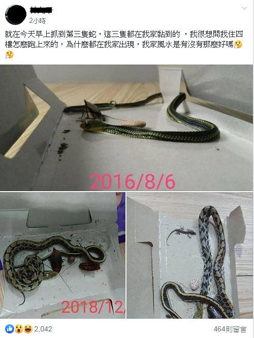 住4樓抓到3條蛇!他嚇傻「我家風水好?」 網驚:發大財爆怨公社臉書