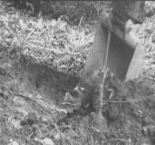 埋屍 山區 女童 虐死