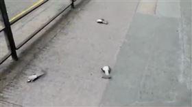 香港,鳥屍,反送中,催淚彈