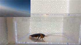 中國,蟑螂,太空,生命力,好奇五先生(圖/翻攝自好奇五先生YouTube)