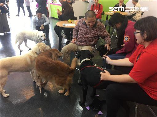 總統蔡英文的三隻愛犬 Maru、Bella、Bunny