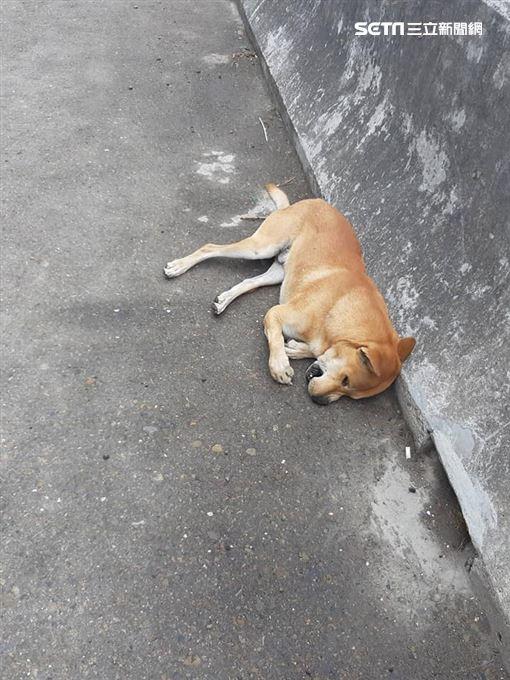 狗,快速道路,車頂,擋風玻璃破