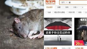 驚!買淘寶會讓鼠疫攻台?疾管署說…