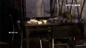 噁心茶餐廳1200