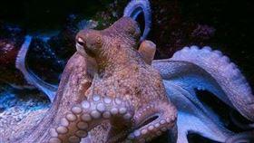 海生館,章魚,兒子,菜市場,海鮮(圖/翻攝自PIXABAY)