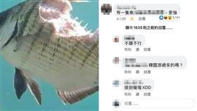 魚,留言,神人,暗諷,韓國瑜,朝聖 圖/翻攝爆廢公社二館
