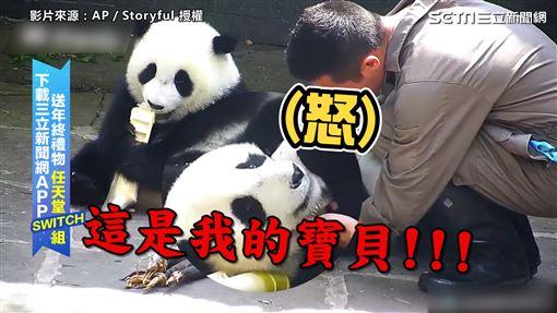 ▲熊貓不願讓飼養員拿走自己的小毛毯。(圖/AP/Storyful 授權)
