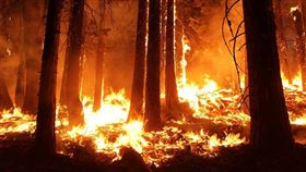 森林大火,火災(示意圖/翻攝自pixabay)