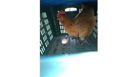 先有雞,先有蛋,貴州,化石研究,有答案(圖/翻攝自臉書)
