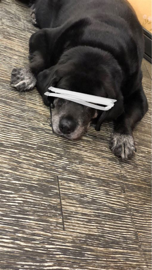 燒臘店,寵物,狗,胖,伙食,PTT 圖/翻攝自PTT